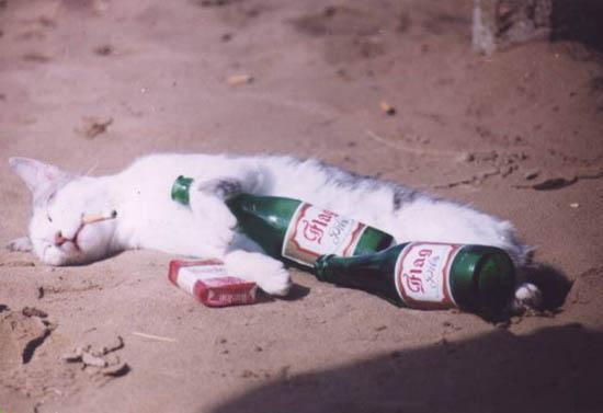 Katze im Vollrausch mit Bierflaschen, Zigarettenschachtel und Kippe