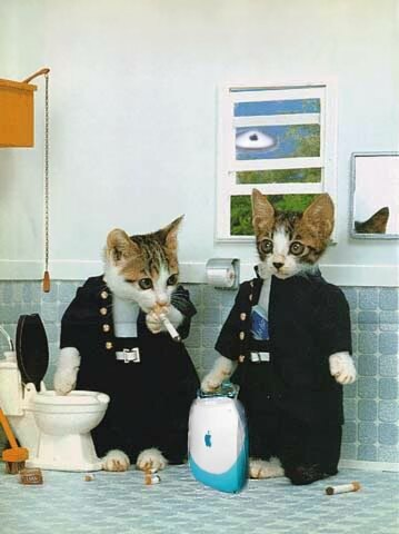 Zwei Katzen rauchen im WC