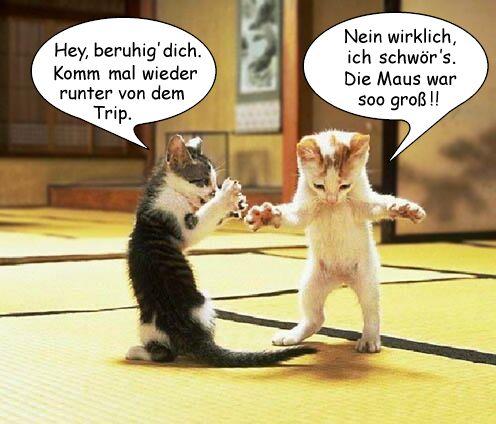 Zwei junge Katzen beim spielen