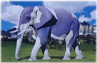 lustiges foto ein lila elefant in den alpen. Black Bedroom Furniture Sets. Home Design Ideas