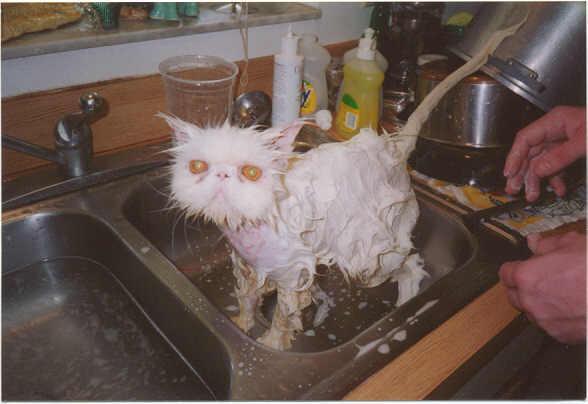 Katze und Kochtöpfe werden gespült