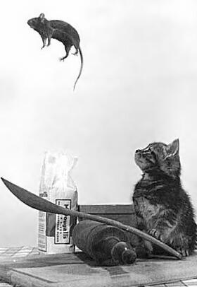 Katze katapultiert Maus mit einem Löffel in die Luft