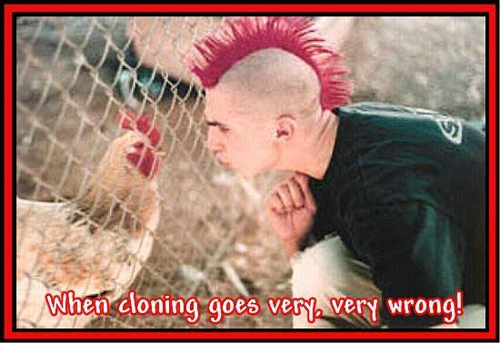 Punker mit Irokesen-Schnitt sieht dem Huhn sehr ähnlich