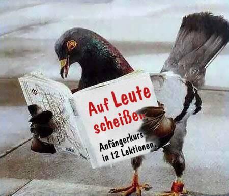 """Die Taube liest das Buch """"Auf Leute scheißen"""""""