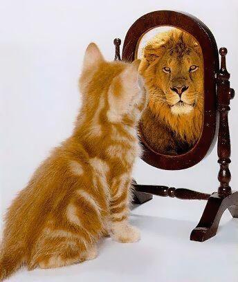 Kätzchen schaut in den Spiegel und ein Löwe schaut heraus