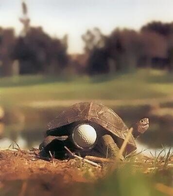 Golfball im Hinterteil einer Schildkröte