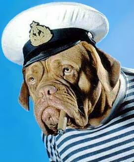 Hund mit Kleidung, Mütze und Zigarre