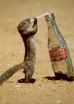 Eichhörnchen trinkt Cola mit einem Strohhalm aus Flasche