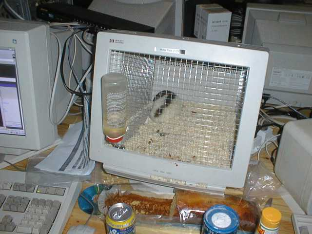 Hamster-TV, Monitorgehäuse als Käfig für Hamster