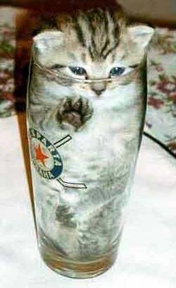 Kleines Kätzchen im Trinkglas