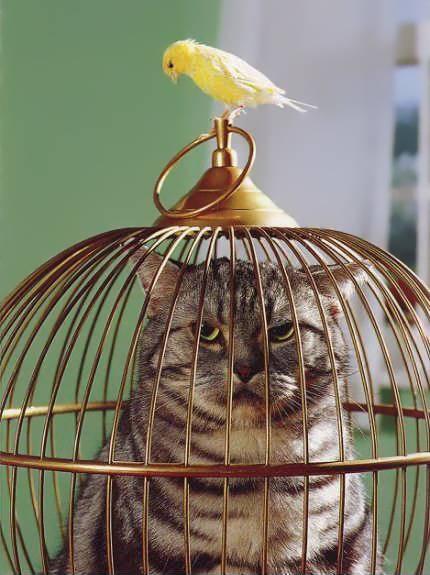 Verkehrte Welt. Katze im Käfig, und Vogel im Freien