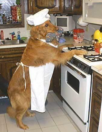 Hund mit Schürze, Koch-Mütze und Topflappen aufrecht am Herd
