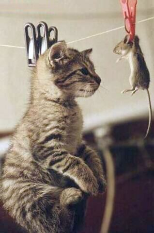 Katze und Maus aufgehängt an der Wäscheleine