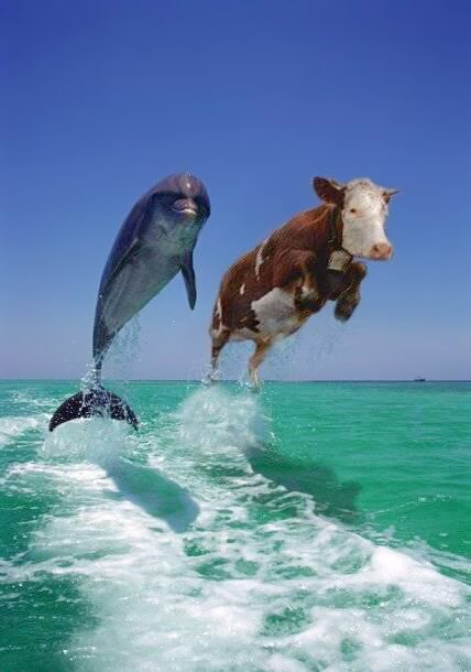 Unlikely Cousins: Whales and Hippos