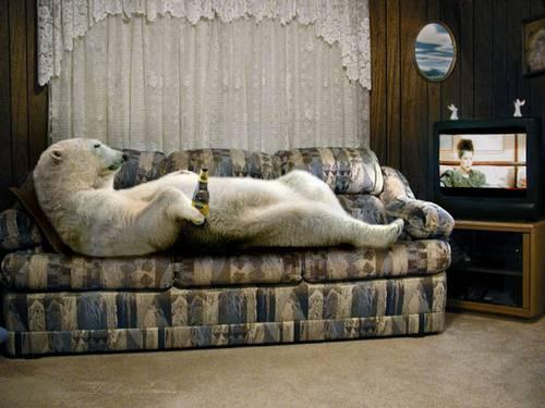 Eisbär auf dem Sofa vor dem Fernseher