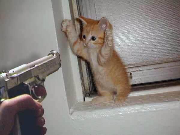 Pfoten hoch! Kleine Katze wird mit Pistole bedroht