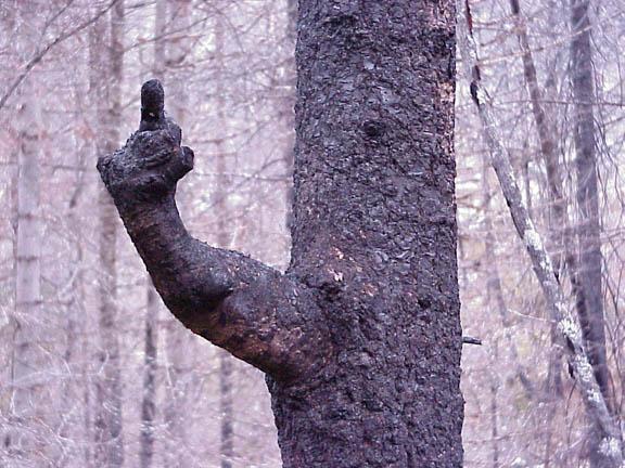 Baum zeigt Stinkefinger