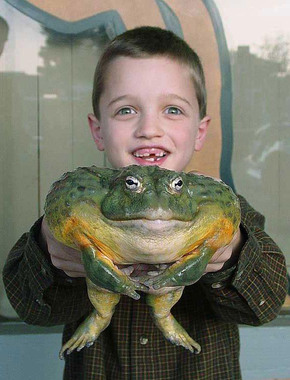 Junge mit riesigem Frosch