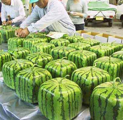 würfelförmige Wassermelonen